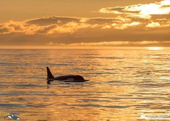 Whale Watching Sunset Tours