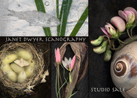 Janet Dwyer Photography, Janet Dwyer, Salt Spring Island