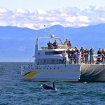 Eagle Wing Whale & Wildlife Watching Tours, Victoria