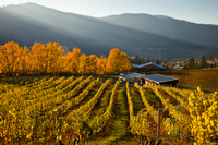 Meyer Family Vineyards, JAK  Meyer, Okanagan Falls